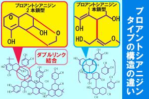 ポルフェノールの構造