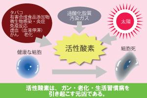 活性酸素の肌影響