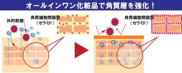 角質細胞間脂質と皮膚バリアの関係