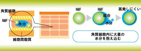 NMF(天然保湿因子)とは?