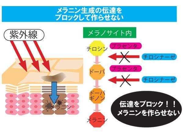 シミの原因になるメラニンを除去して、肌を明るくする効果がプラセンタにあるので美白効果がありシミを改善できる