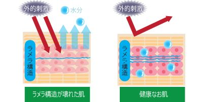 合成界面活性剤によるラメラ構造破壊