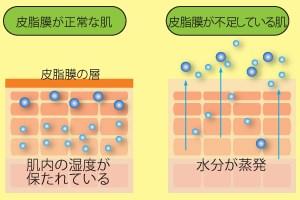 皮脂膜の働き(イメージ図)
