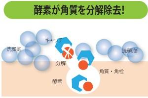酵素がタンパク質を分解するイメージ図