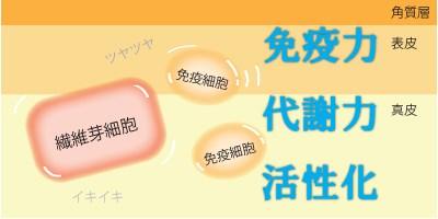 アルカリ石鹸による肌の活性化