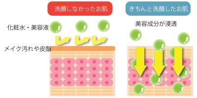 洗顔による基礎化粧品の浸透の違い
