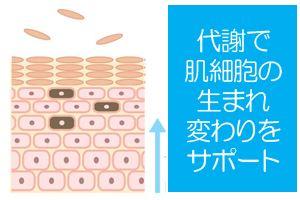 代謝で肌細胞の生まれ変わりをサポート