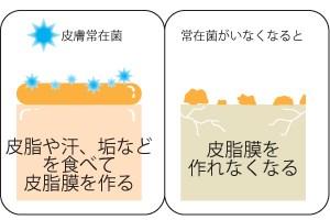 皮膚常在菌の働き