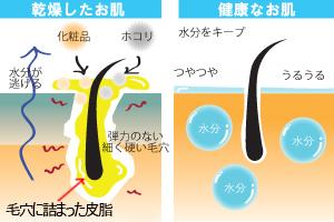 乾燥肌と健康肌の違い
