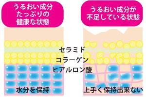 肌の保湿力の仕組み(イメージ図)