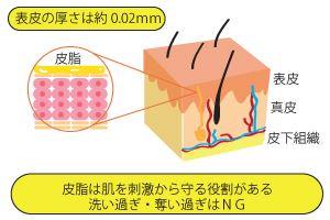 皮脂と肌バリアの関係
